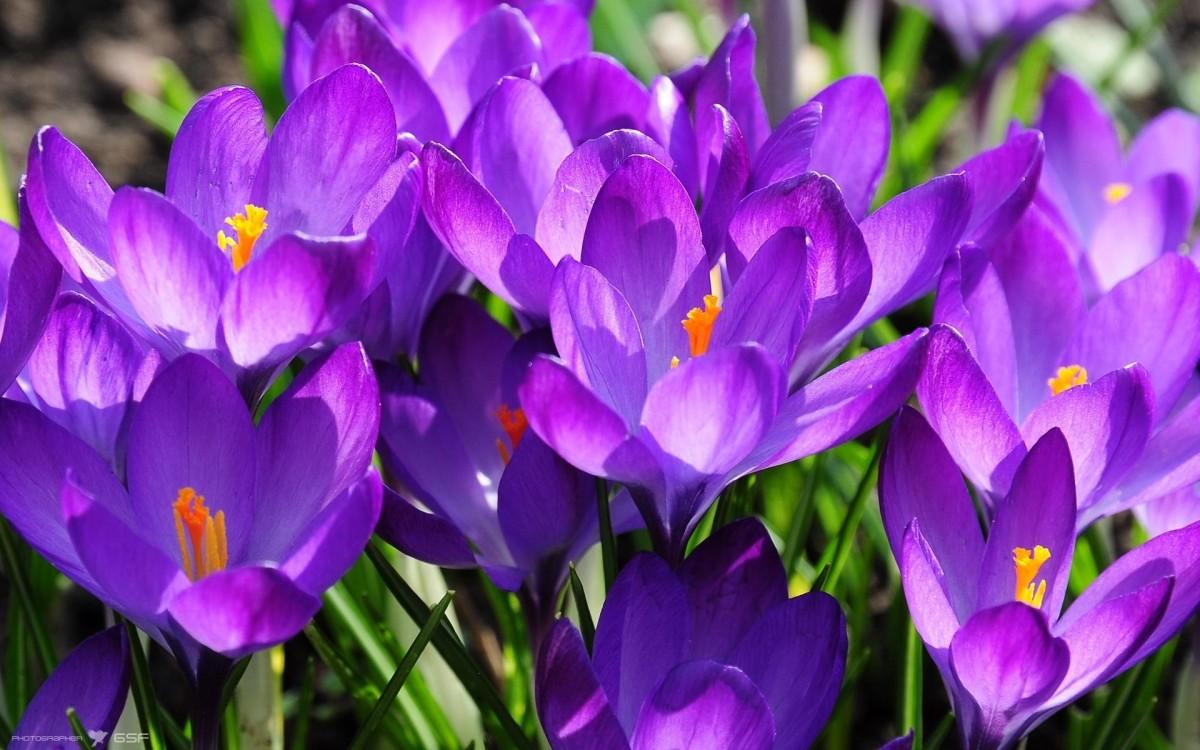 в  цветах:   Сиреневый, Фиолетовый, Черный.  в  .