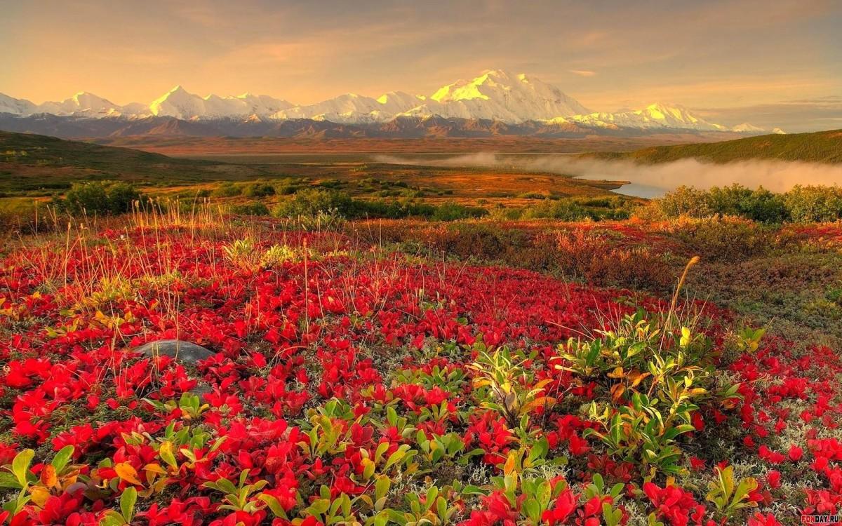 Ландшафт в цветах: оранжевый, бордовый, темно-зеленый, салатовый, коричневый. Ландшафт в .