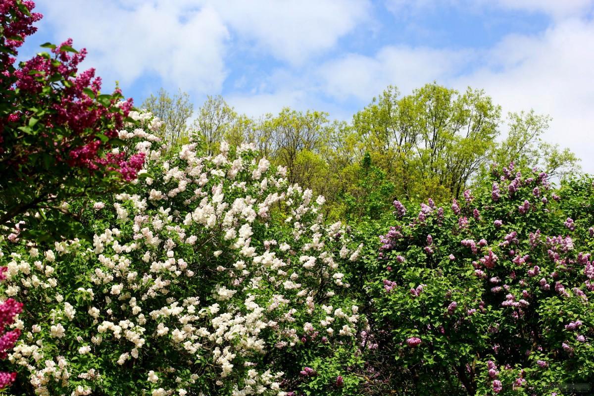 Ландшафт в цветах: черный, светло-серый, белый, темно-зеленый, бежевый. Ландшафт в стилях: экологический стиль.