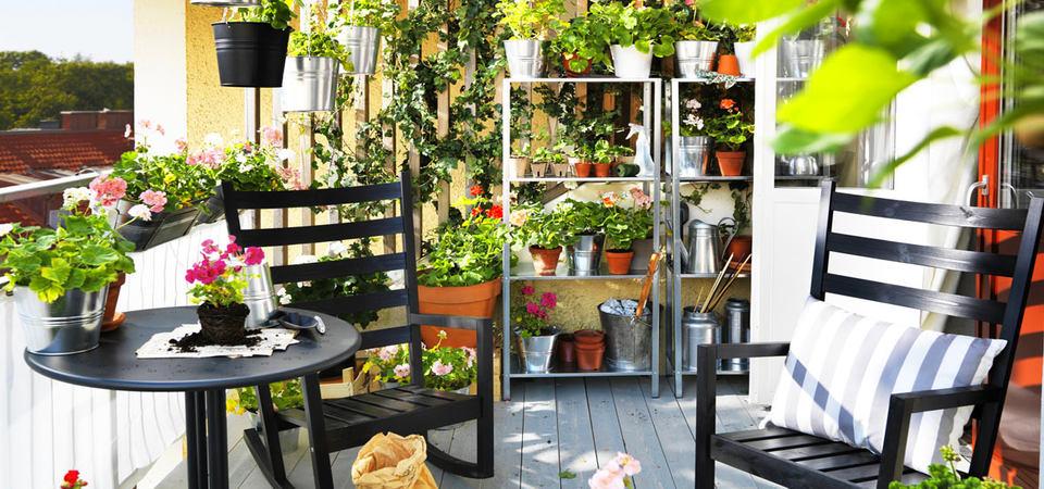 Что из цветов посадить у себя на балконе и когда нужно начинать