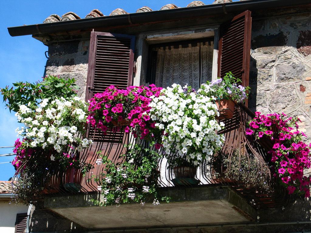 Цветы в интерьере квартиры: создатели уюта - dekodiz.ru.