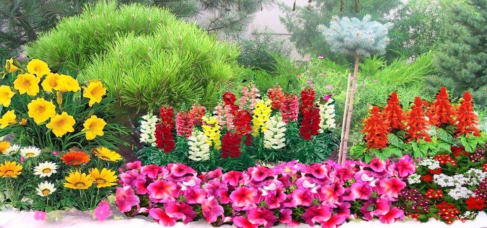 Какие цветы посадить на даче: 11 лучших однолетников средней полосы