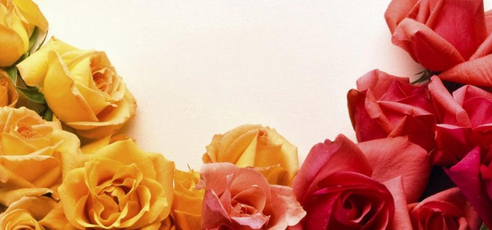 Розовые розы, или Как продлить жизнь букету
