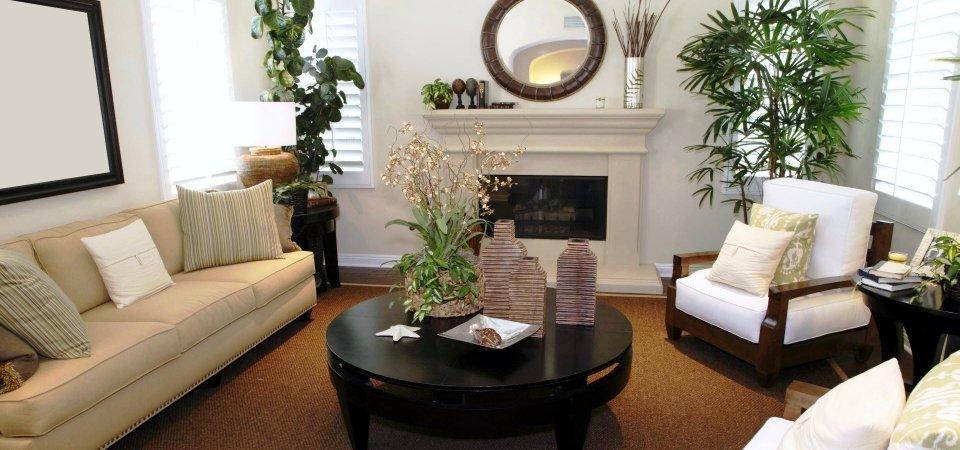 фото пальмы в интерьере гостиной