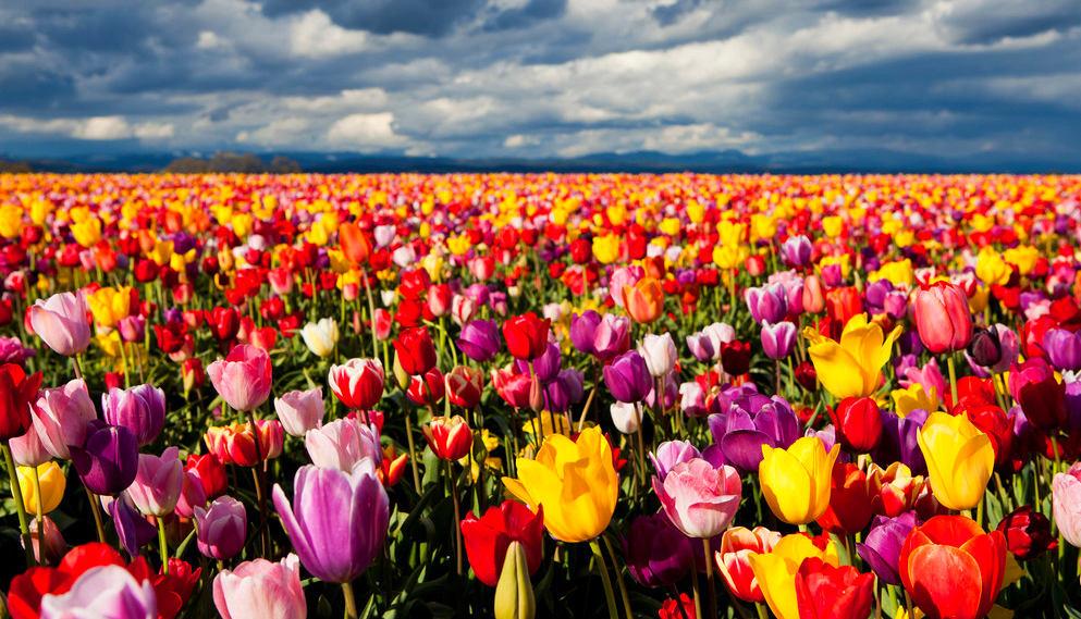 Ландшафт в цветах: красный, оранжевый, желтый, голубой, черный. Ландшафт в .
