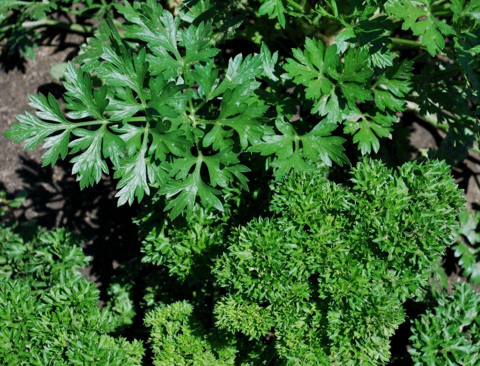 Ландшафт в цветах: черный, темно-зеленый, салатовый. Ландшафт в .