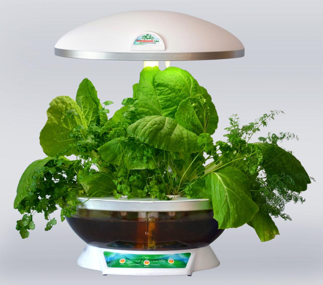 Как просто можно вырастить у себя на кухне зелень, помидоры, клубнику: обзор гаджетов ботаникам в помощь