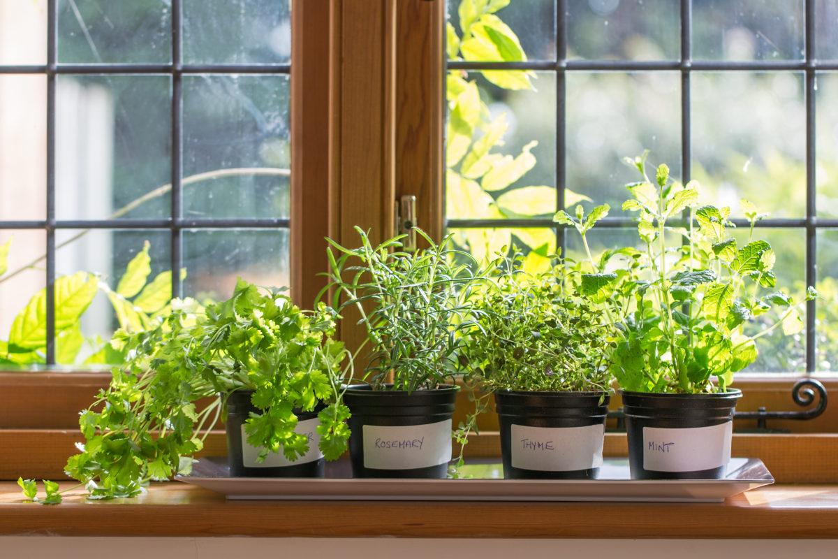 10 лучших пряностей и овощей, чтобы устроить сад на балконе