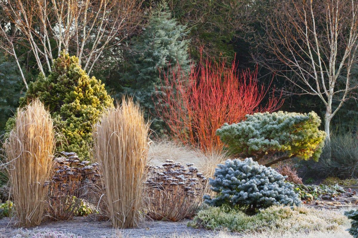 Волшебные сады как из сказки: 30 зимних фото