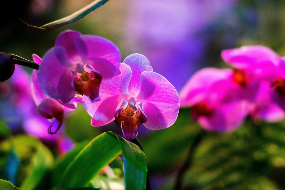 20 фантастических орхидей, цветущих прямо сейчас