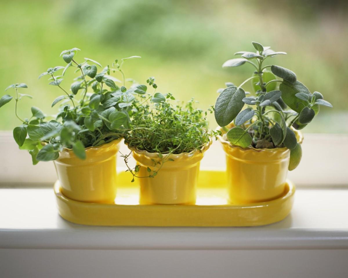 Огород на подоконнике: какие овощи можно выращивать дома
