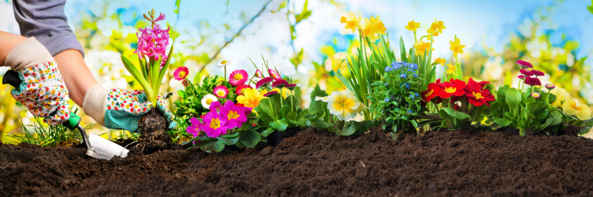 Что сажать в мае: на заметку начинающим дачникам
