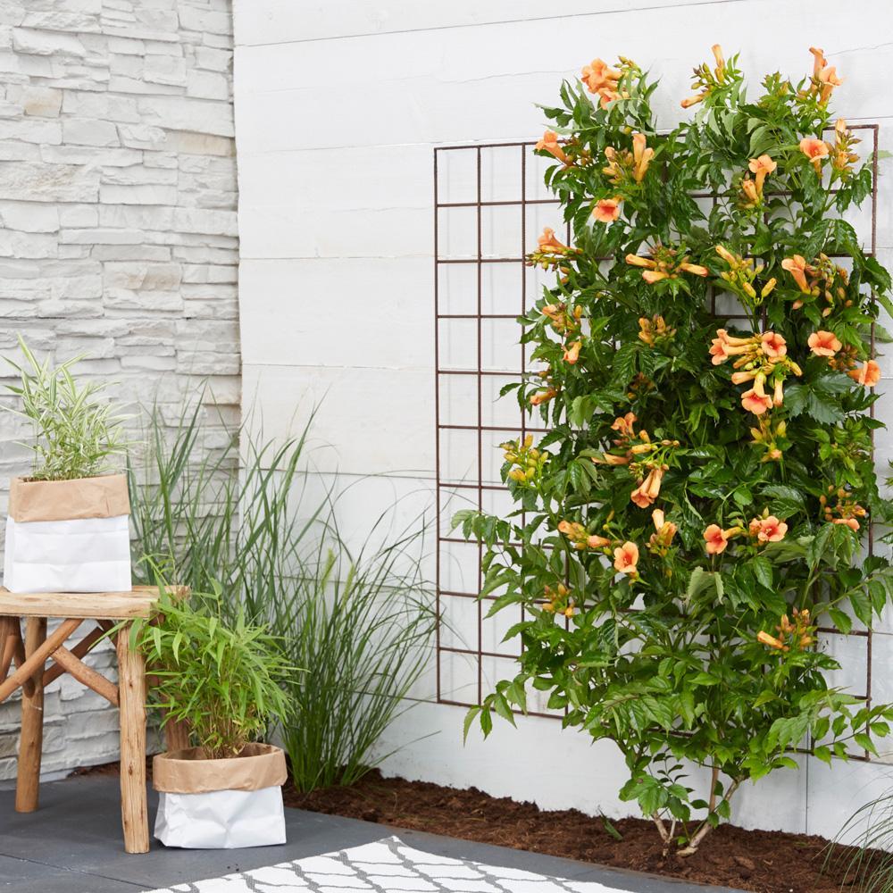 11 вьющихся растений для тенистой беседки на балконе